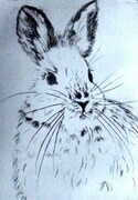 Snowshoe Hare @ 25 Below