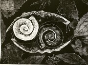 Two Snails in the World, Monotype